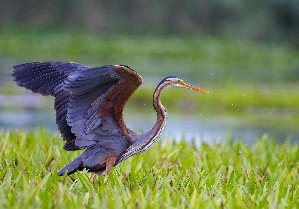 Birdwatching on Kos: Paradise of Migratory Birds