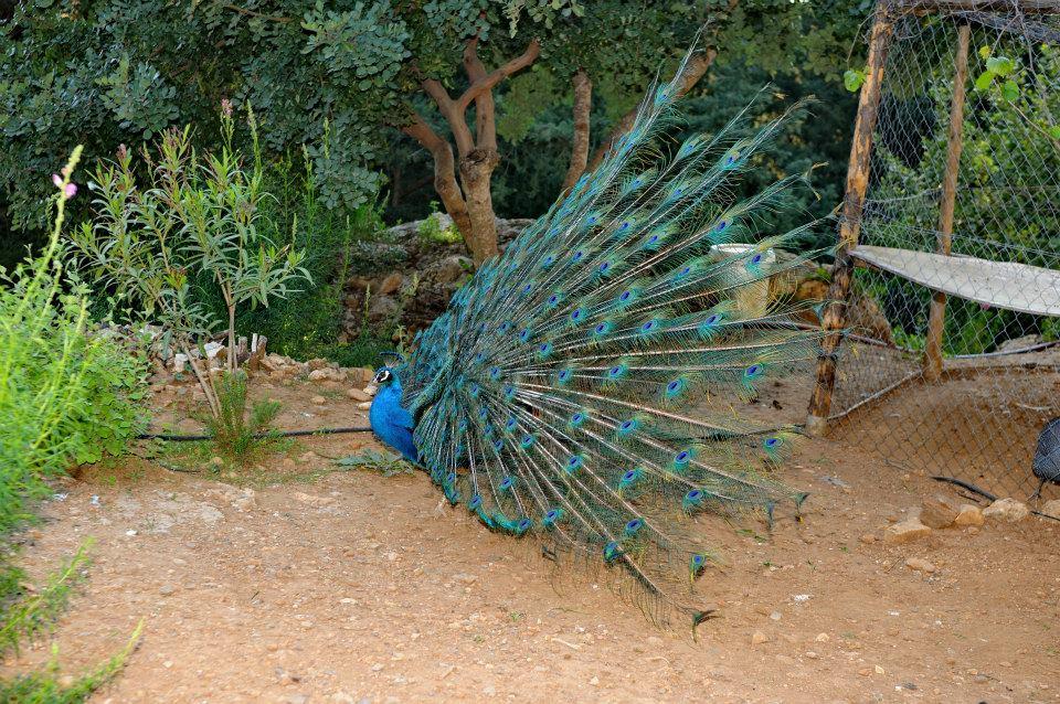 Kos Natural Park Zoo