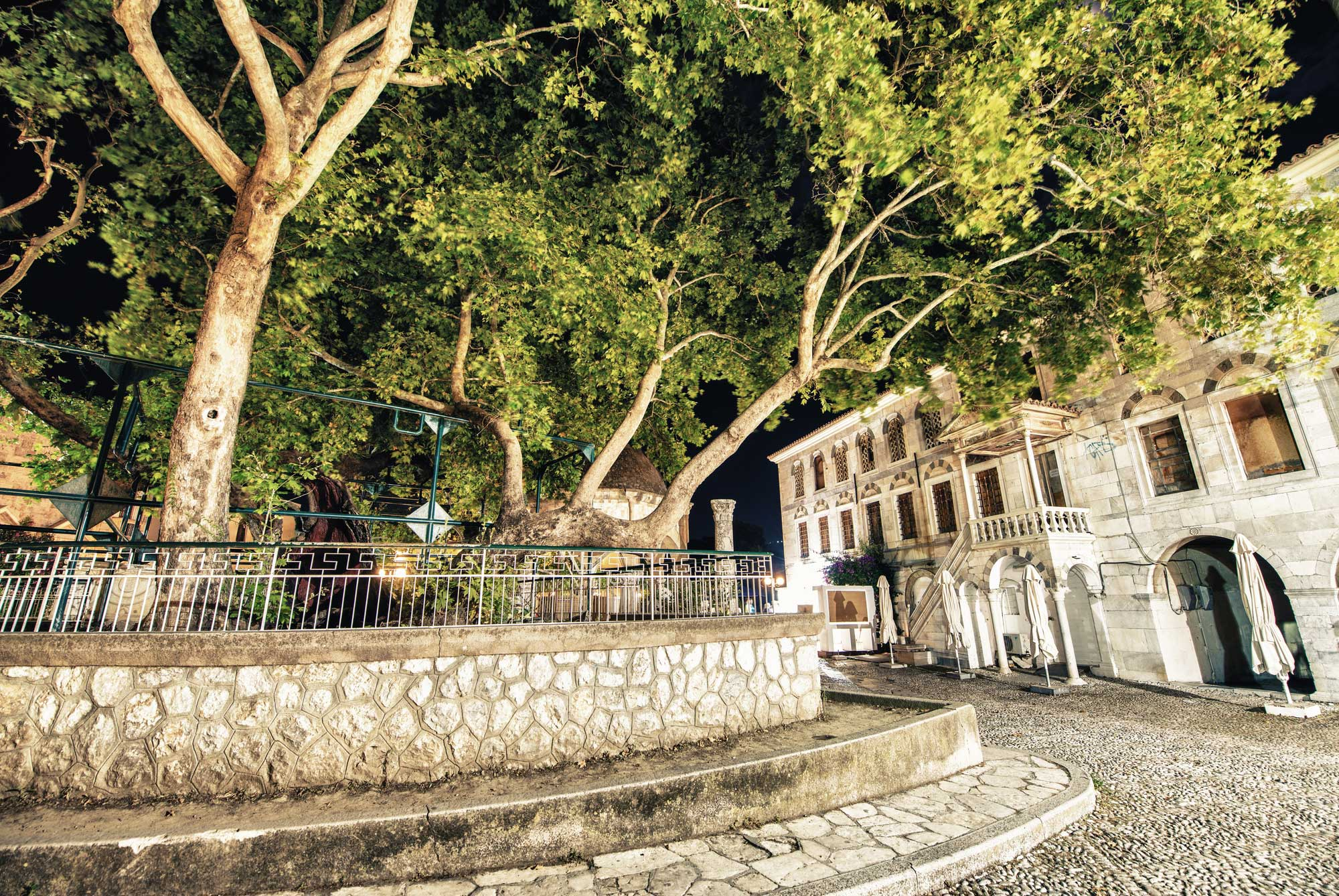 Tree of Hippocrates: Preserving the Legend