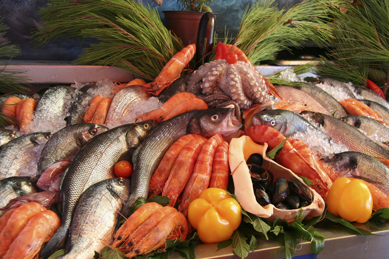 "What to eat at a Greek ""Psarotaverna"": Greek fish explained"