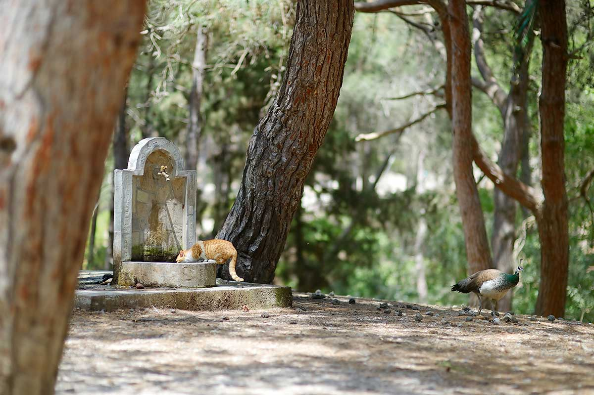 Picnic in Plaka Forest: A Nature Lovers' Pastime on Kos Island